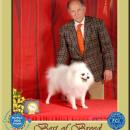 World Dog Show - Polonia